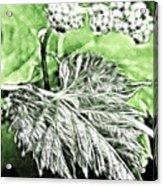 Grape Vine Leaf Acrylic Print by Odon Czintos