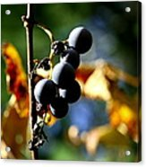 Grapes On The Vine No.2 Acrylic Print by Neal  Eslinger