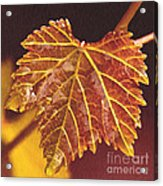 Grapevine In Fall Acrylic Print by Artist and Photographer Laura Wrede