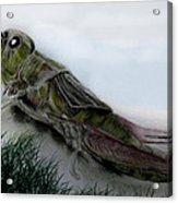 Grasshopper Resting Acrylic Print by Cynthia Adams
