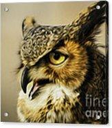 Great Horned Owl Acrylic Print by Julieanna D