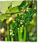 Green Berries Acrylic Print by Kaye Menner