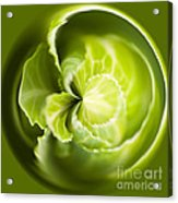 Green Cabbage Orb Acrylic Print by Anne Gilbert