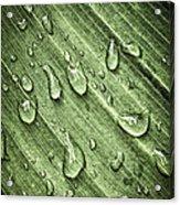 Green Leaf Background With Raindrops Acrylic Print by Elena Elisseeva