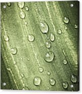 Green Leaf With Raindrops Acrylic Print by Elena Elisseeva