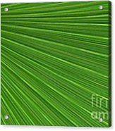 Green Palm Abstract Acrylic Print by Kathleen Struckle