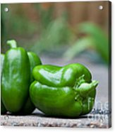 Green Peppers Acrylic Print by Kay Pickens