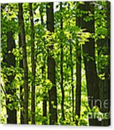 Green Spring Forest Acrylic Print by Elena Elisseeva