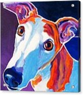 Greyhound - Halle Acrylic Print by Alicia VanNoy Call