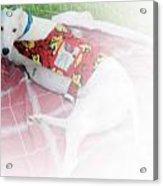 Greyhound Rescue 5 Acrylic Print by Jackie Bodnar