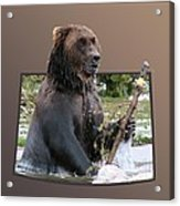 Grizzly Bear 6 Out Of Bounds Acrylic Print by Thomas Woolworth