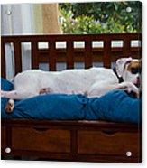 Guard Dog Acrylic Print by Dennis Reagan