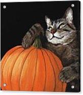 Halloween Cat Acrylic Print by Anastasiya Malakhova