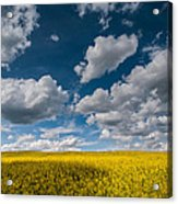 Happiness Acrylic Print by Davorin Mance