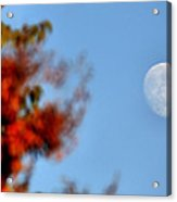 Harvest Moon Acrylic Print by Karen M Scovill