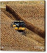 Harvest Time Acrylic Print by Eva Kato