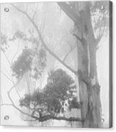Haunted Forest Acrylic Print by Jenny Rainbow
