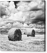Haybales Uk Acrylic Print by Jon Boyes