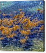 Hdr Underwater Plant Life Acrylic Print by Jamie Roach