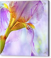 Heavenly Iris 2 Acrylic Print by Theresa Tahara
