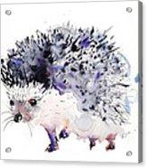 Hedgehog Acrylic Print by Kristina Bros