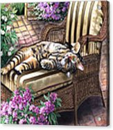 Hello From A Kitty Acrylic Print by Regina Femrite
