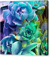 Hens And Chicks Series - Deck Blues Acrylic Print by Moon Stumpp