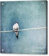 Herald Of Spring Acrylic Print by Priska Wettstein