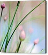 Herb Garden Acrylic Print by Kim Fearheiley