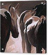 Herd Of Horses Acrylic Print by Natasha Denger