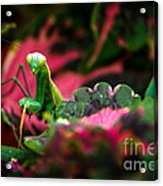 Here I Am Acrylic Print by Robert Bales
