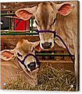 Heres Looking At You Acrylic Print by Michael Porchik