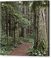 Heritage Forest Acrylic Print by Randy Hall