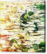 Heron Among Lillies Photography Light Leaks Acrylic Print by Chris Andruskiewicz