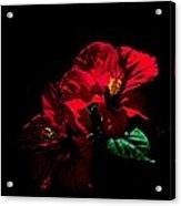 Hibiscus Acrylic Print by Jacob Sela