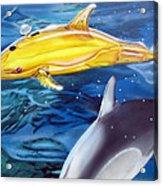High Tech Dolphins Acrylic Print by Thomas J Herring