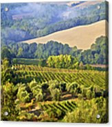 Hills Of Tuscany Acrylic Print by David Letts
