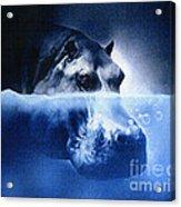 Hippo Acrylic Print by Robert Foster