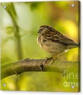His Eye Is On The Sparrow Acrylic Print by Lois Bryan