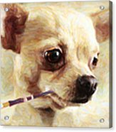 Hollywood Fifi Chika Chihuahua - Painterly Acrylic Print by Wingsdomain Art and Photography
