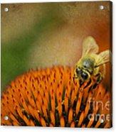 Honey Bee On Flower Acrylic Print by Dan Friend