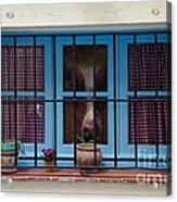 Horse Behind The Window Acrylic Print by Victoria Herrera
