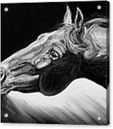 Horse Head Black And White Study Acrylic Print by Renee Forth-Fukumoto