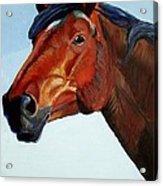 Horse Head Acrylic Print by Mike Jory