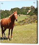 Horse Hill Mill Valley California 5d22679 Acrylic Print by Wingsdomain Art and Photography