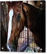 Horse In A Box Stall - Horse Stable Acrylic Print by Lee Dos Santos