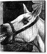 Horse Acrylic Print by Mark Zelmer