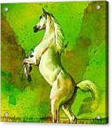 Horse Paintings 010 Acrylic Print by Catf