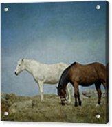Horses On A Hill Acrylic Print by Kathy Jennings