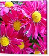 Hot Pink Acrylic Print by Julie Palencia